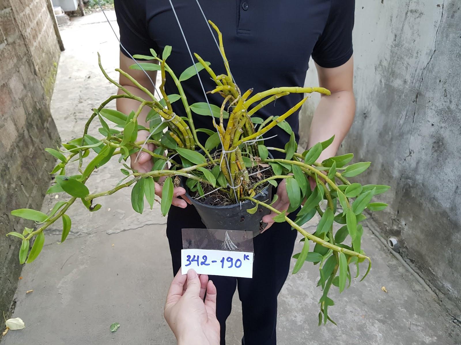 Hoa lan Long tu