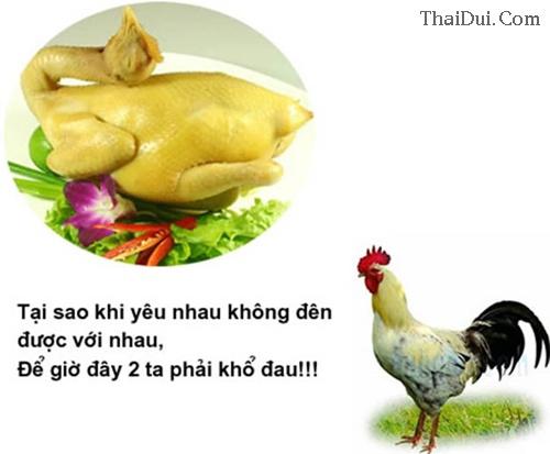Thơ lục bát chế về con gà
