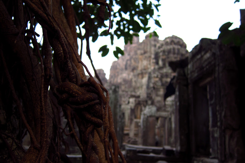 Roots at Bayan