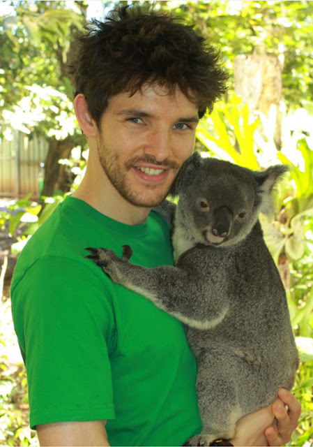 Colin Morgan and a koala