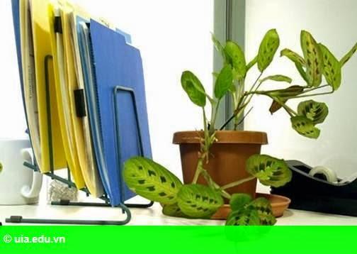 Hình 1: Chọn và bài trí cây xanh trên bàn làm việc hợp phong thủy