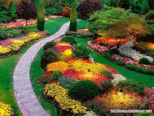 Những hình ảnh đẹp về hoa cho bạn ngắm mãi không biết chán P2