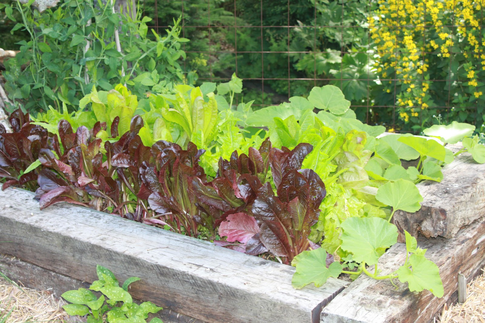Rising food prices and shortages make a garden the perfect solution.