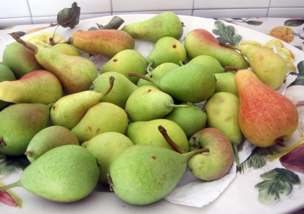 Pears from the Latella and Scordo farms in Calabria