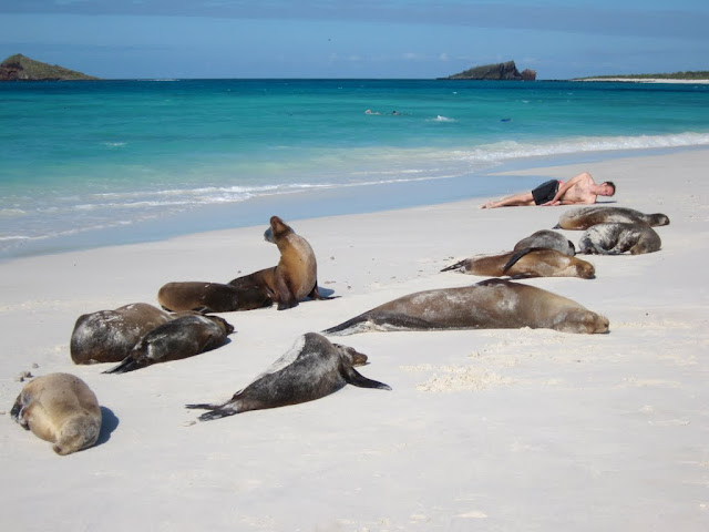 Sea Lions at Floreana Island