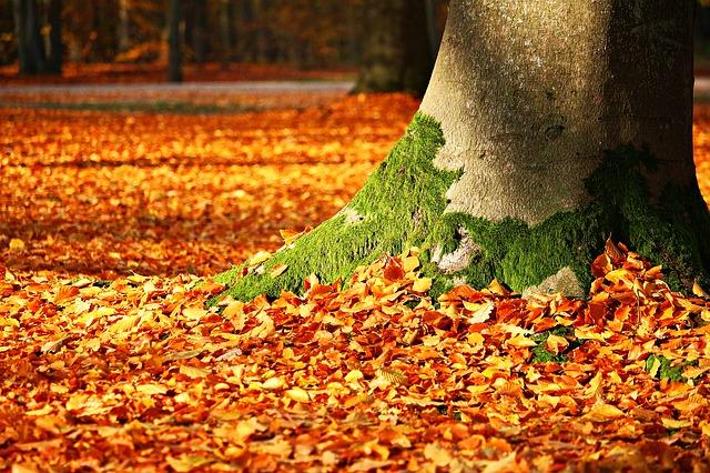 ảnh gốc cây Mùa Thu đầy xác lá, rong rêu