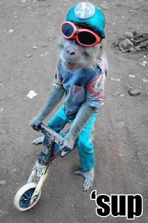 monkey on bike