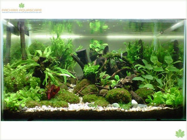 Penting 7 manfaat membuat aquascape yang belum anda ketahui kaskus - Gambar aquascape ...