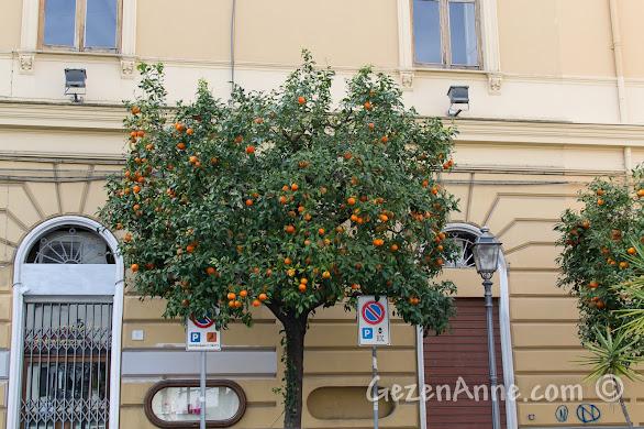 Sorrento'da ana cadde üzerindeki mandalina ağaçları