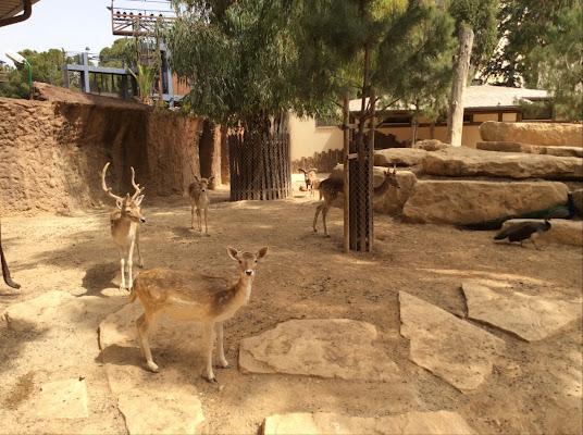 Municipal Zoo