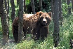Carpathians bear national park
