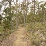Green track on Mt Sugarloaf (324584)