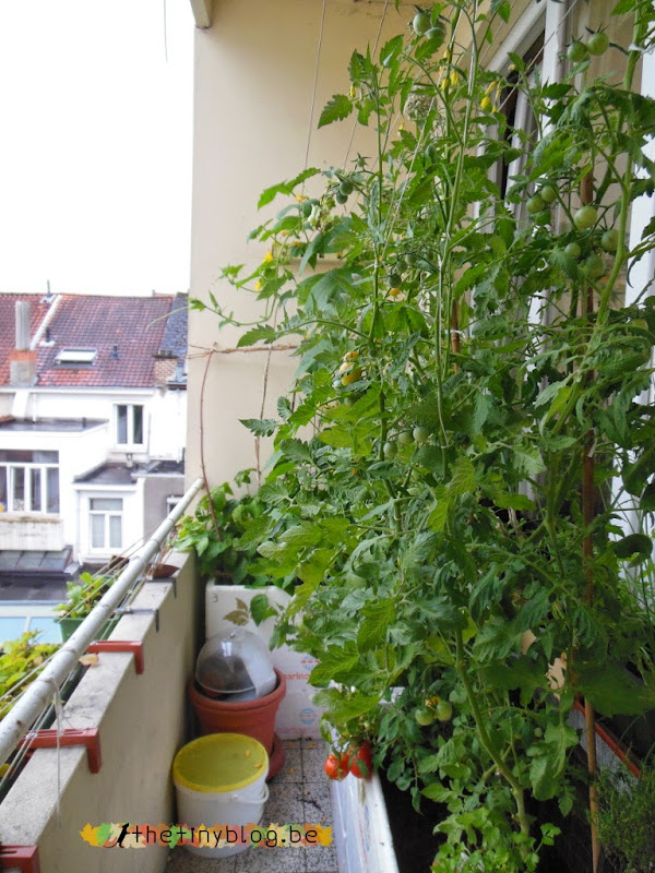 Balcony Vegetables Garden