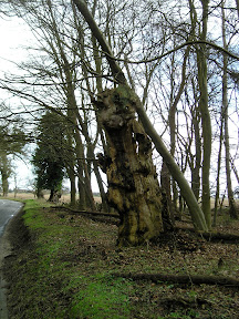 Old trees on the edge of Staverton Park