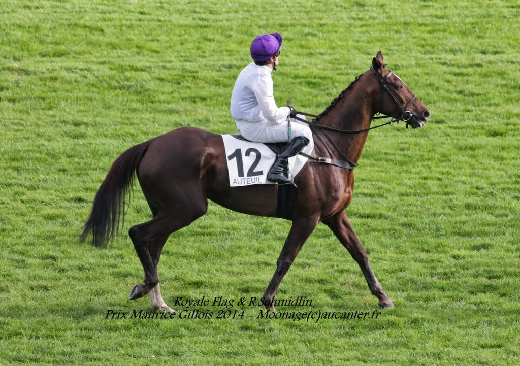 Photos Auteuil 2-11-2014 (48h de l'obstacle) IMG_5450