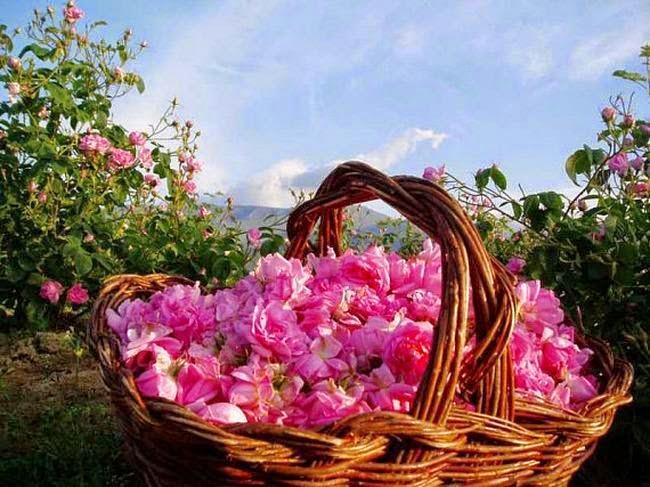 Польза лепестков роз