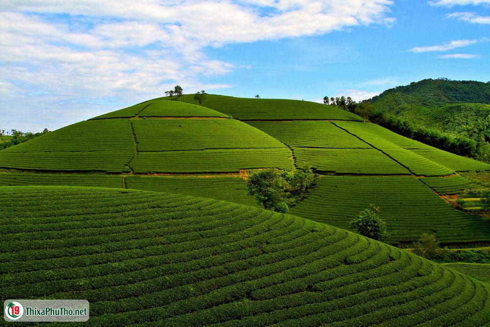Cao nguyên xanh - Nét đẹp đồi chè Phú Thọ