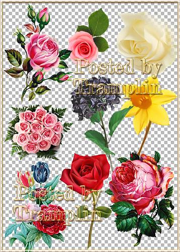 Клипарт в Psd – Цветы