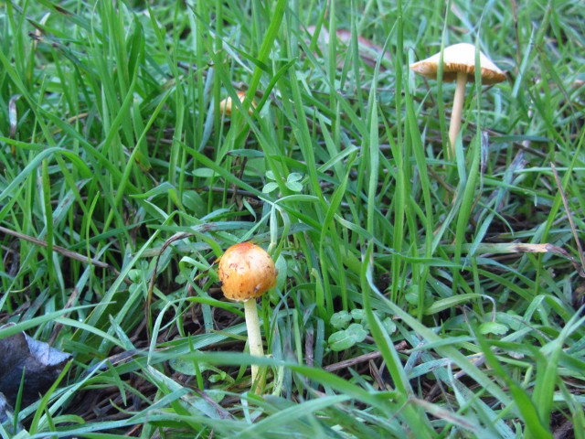 little mushrooms in yellowy orange