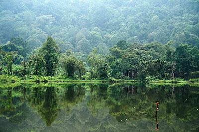 tropis Keanekaragaman hayati (biodiversitas)
