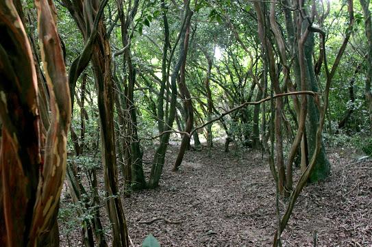Bosque dos Camboins - Ilha do Pontal - novas imagens Mini_2013_03_1609_59_519268
