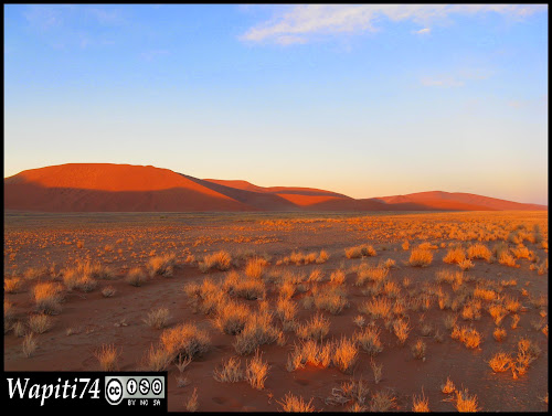 Balade australe... 11 jours en Namibie - Page 2 IMG_0768