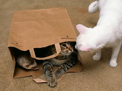Paper Bag Curiosity.jpg