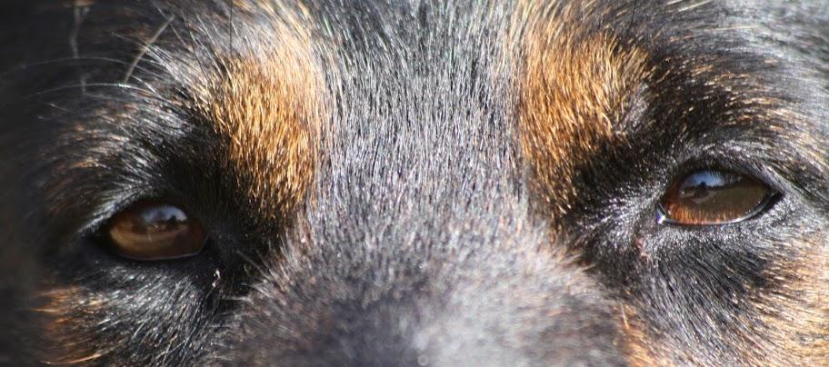 Xita, up close on her eyes
