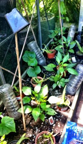 How my garden fared fending for itself...