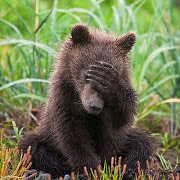 что значит сон медведь