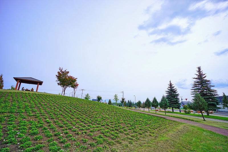 美瑛 花人公園 写真2