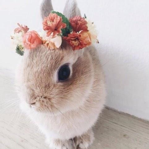 Bir minik tavşan