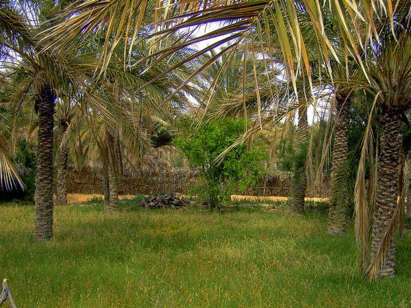 Оазисы в Тунисе