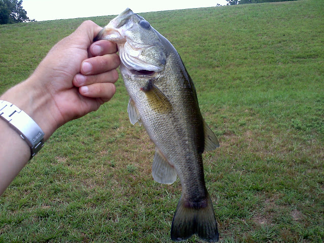 largemouth on topwater