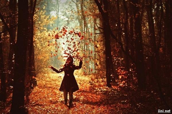 ảnh cô gái đi trong rừng lá xào xạc của mùa thu