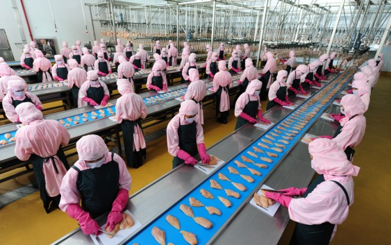 Đơn hàng chế biến thủy sản cần 6 nữ làm việc tại Aichi Nhật Bản tháng 09/2017