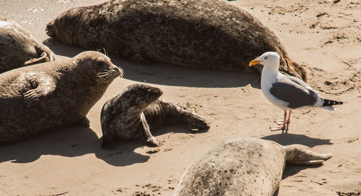 """Two Seals and a Bird"" by Sue Cook"