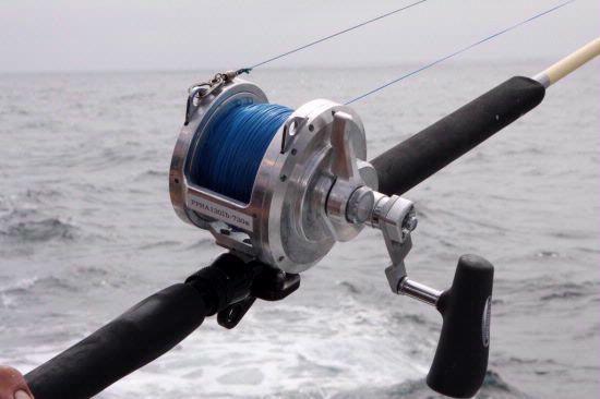 talica 50 2 reel fishing videos