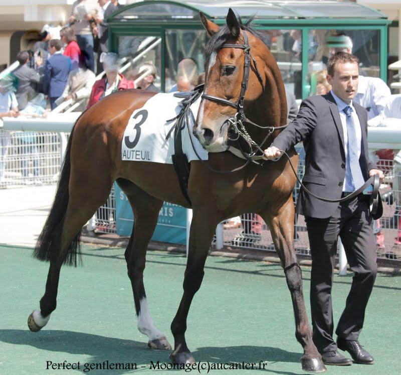 Photos Auteuil 17-05-2015 Journée du Grand Steeple IMG_0009