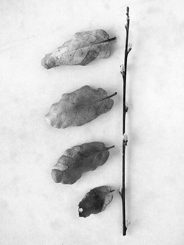 still nature photos, still life, black and white, fotografias de natureza morta, ruimnm