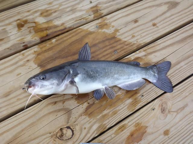 Two zetts fish farms product sources pond boss forum for Zetts fish farm