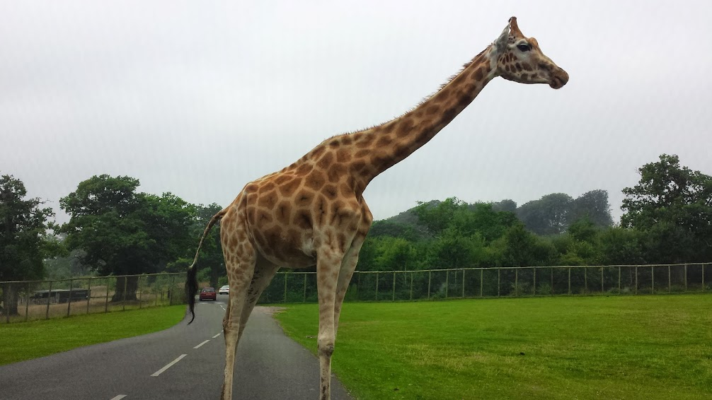 Review: A Family Day at Longleat
