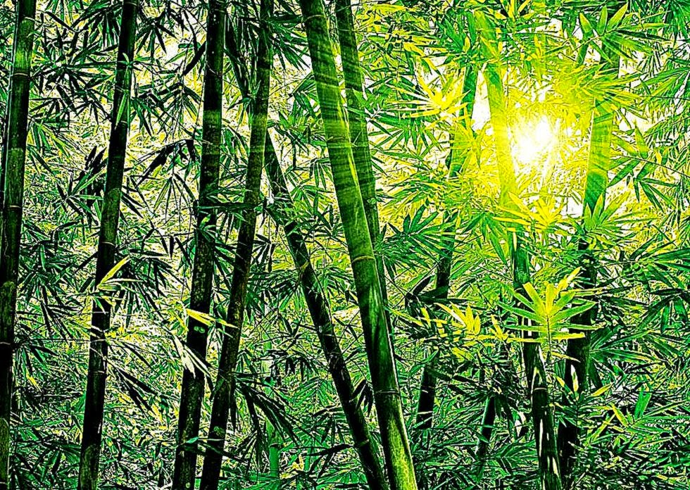 Bamboo forest wall mural wallpaper best free hd wallpaper for Bamboo mural wallpaper