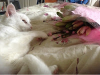 White cat, bouquet of cherry blossom and lillies in bed