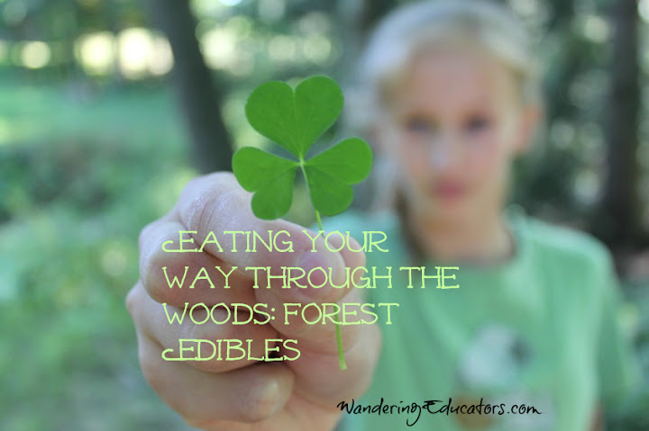Eating Your Way Through the Woods: Forest Edibles