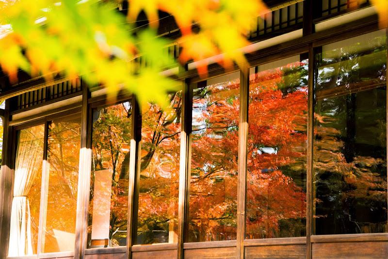京都 天授庵 紅葉 写真3