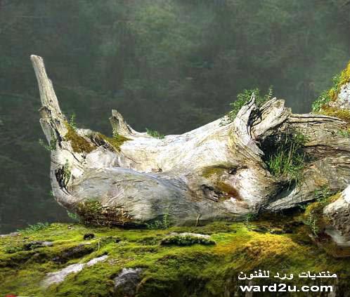 خيمه ورد للفنون رمضان 2011