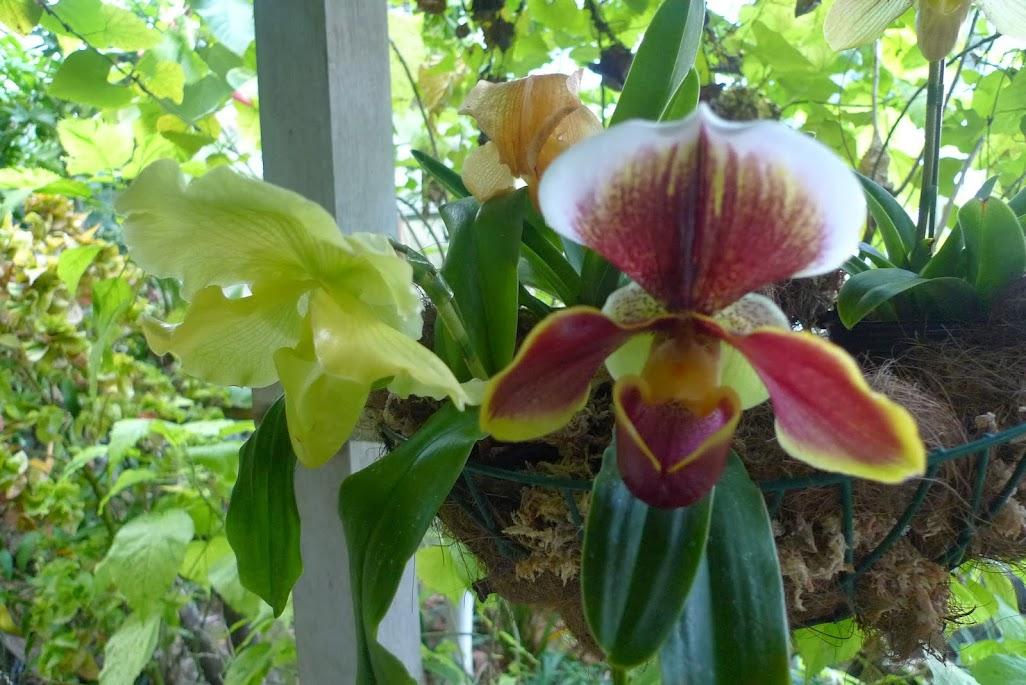 fleur hakone