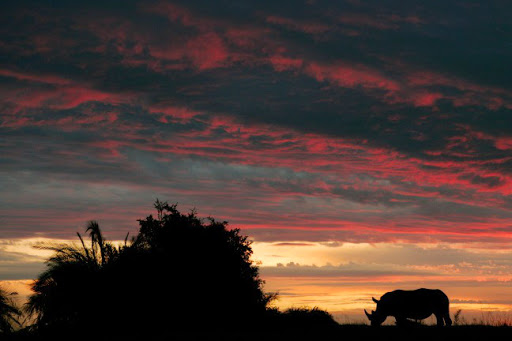 African sunset, with Rhino. Photo by Beverly Joubert
