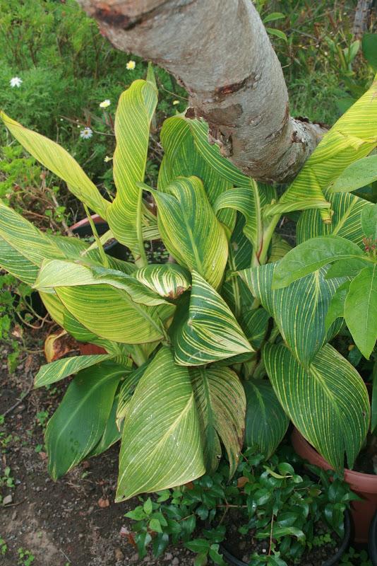 Futur jardin d'orchidées!!! IMG_3560